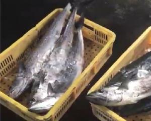 徳島の海で獲れた魚
